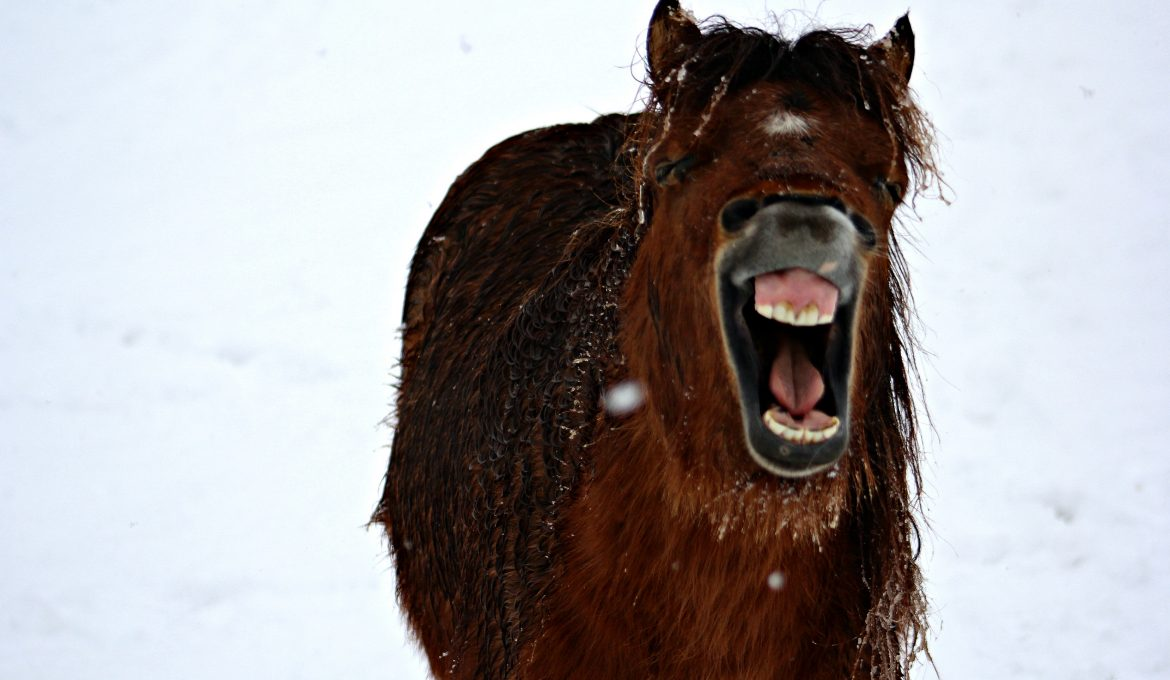 Funny Horse Photos To Brighten Your Day