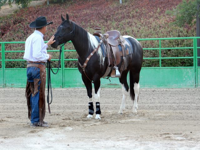 When Teaching Horsemanship