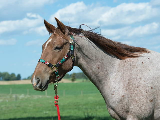 How to Fit a Nylon Halter