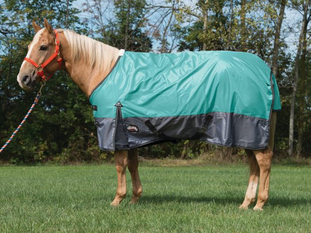 Does Your Horse's Blanket Fit Correctly?