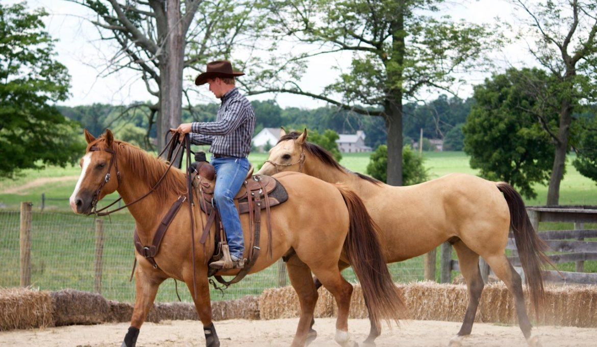Success in the Saddle: Ponying Horses