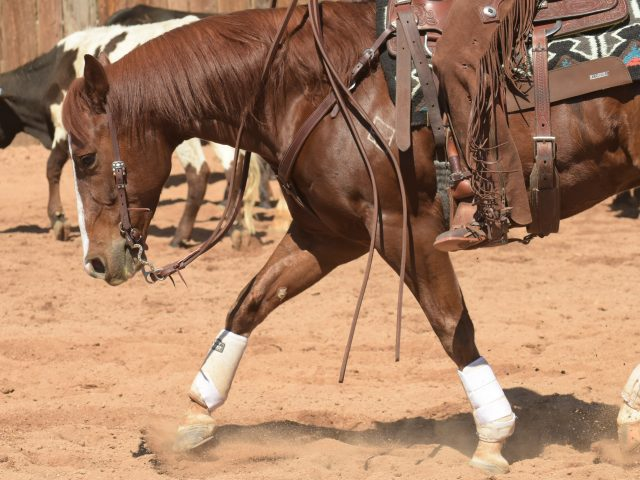 Does my horse need a back cinch?